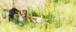 dog-banner-4